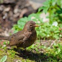 Птица в парке :: Алина Качайло