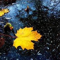 Последняя осень.. :: Lena Li