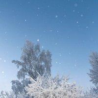 Покрылись деревья снежком. :: Виталий Дарханов