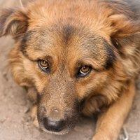 мой верный пёс-дружок :: Борис Коктышев