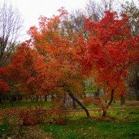 Осень :: Yuri Gruzdev