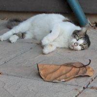Кошка, а может и кот :: Марина Marina