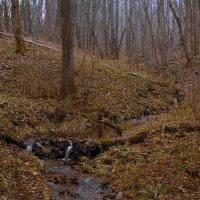 лесной ручей :: Alhna ---
