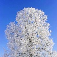 Зимняя красавица :: Валерий Шибаев