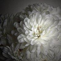 Белые хризантемы........ :: Olenka