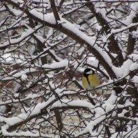 Пришла зима :: Валерий Никитин