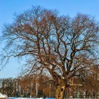 Дерево :: Valerii Ivanov