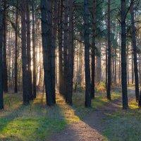 лес :: валерий киреев