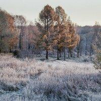 Осень.Первые заморозки. :: Анатолий Платонов