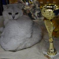 Котейка :: Богдан Петренко