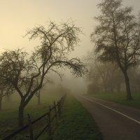 Туманное утро :: Boris Alabugin