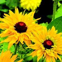 Цветы :: Ольга Иргит