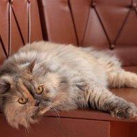 Любимая котейка :: Анастасия Козьякова