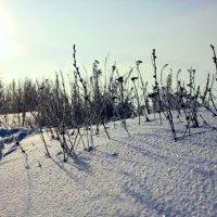 Снежные заносы :: Анастасия Козьякова