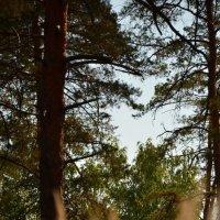 Сердце леса 2 :: Ирина Акимова