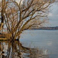 Последнее солнце ноября :: Юрий Муханов