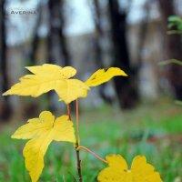 Последние краски осени.. :: Алина Аверина