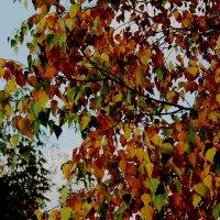 Осень :: Кира К