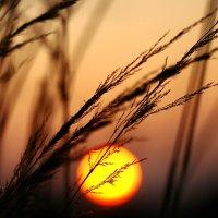 На фоне солнечного диска :: Наталья Крюкова