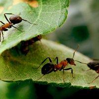 муравьишки :: Наталья Крюкова