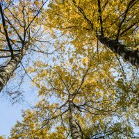 Осень :: Yuriy Puzhalin