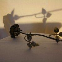 чёрная роза :: Михаил