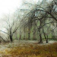 Нежность осеннего снегопада :: Светлана Игнатьева