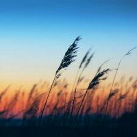 На ветру :: Boris Khershberg