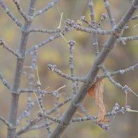 Одиночество :: Сибирь Ворумо