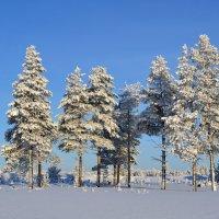 Зимний пейзаж :: Александр Канышев