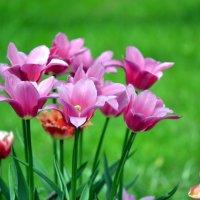 Майские цветы :: Борис Русаков