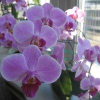 Орхидея :: Вадим Гудин