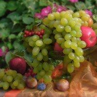 Виноград :: Lara