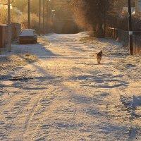 Утро в посёлке :: Елена Смирнова