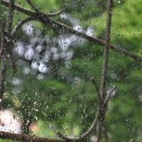 капельки на стекле.. :: юлия комарова