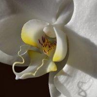 Орхидея! :: Ольга Ознобишина