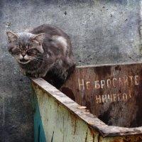 Не бросайте никого :: Максим Минаков