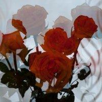 Розы :: Светлана