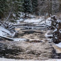 Лесная речка Кенза, 2 декабря :: Борис Устюжанин