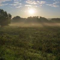 Утро :: Yuri Silin