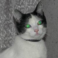 зеленые глаза :: Анна Губенко