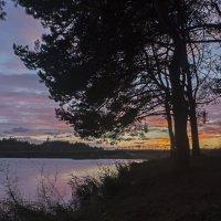 закат в лесу :: Алексей Жариков