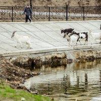 А у реки, а у реки, а у реки))..... гуляют все))) :: Seda Yegiazaryan
