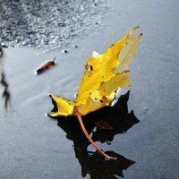 Кленовый лист :: Aine Lin