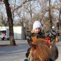 Любим мы лошадок :: Татьяна Гулевич-Хациева