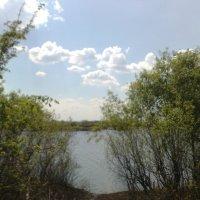Лесное озеро :: Ольга Карпачева