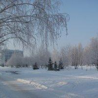 В зимнем парке... (декабрь 2012) :: Наталья Кочетова