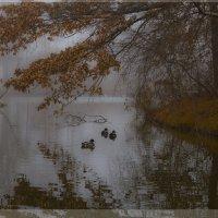 Осенние туманы :: Яков Геллер