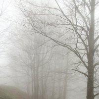 Туман. :: Larisa Gavlovskaya