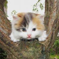 Забавный котенок :: Геннадий Ячменев